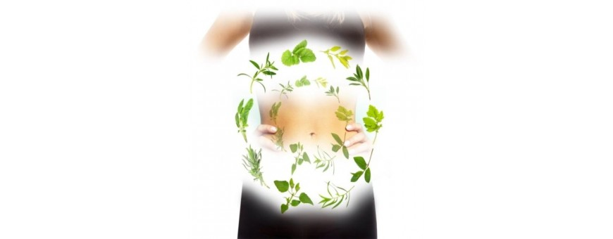 Equilibre Digestif